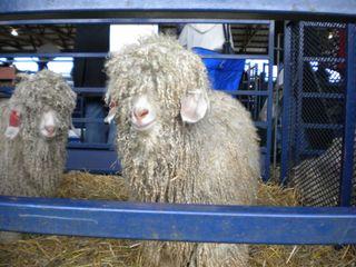 Sheep One